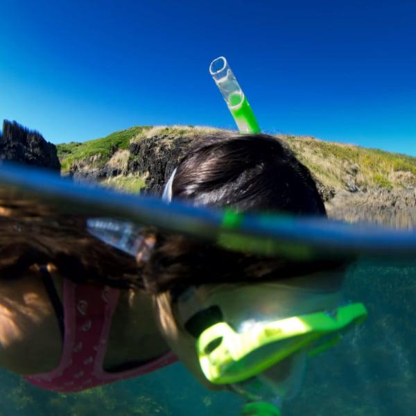 Snorkelling coffs marina