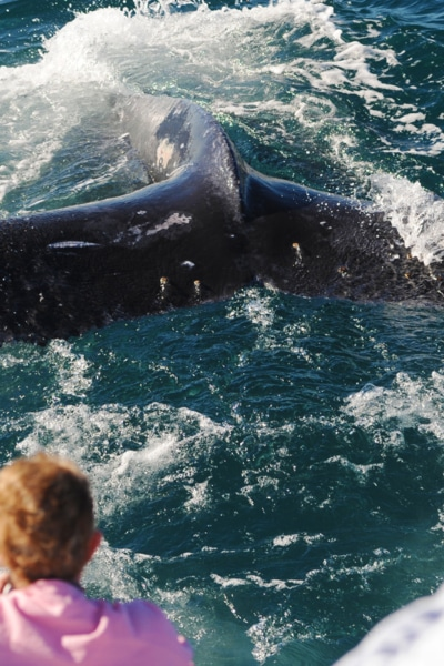 Things to do in Coffs Harbour - Whale Watching